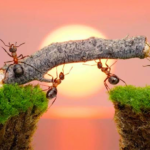 How the philosophy of ants can help you succeed
